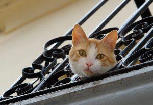 Katze auf Balkon