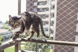 Katze läuft auf Geländer eines mit Schutznetz gesicherten Balkons