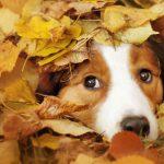 Hund im Laub